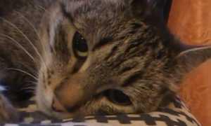 До скольки лет живут домашние кошки — средний возраст