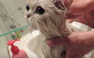 Почему кошки не любят воду и умеют ли они плавать