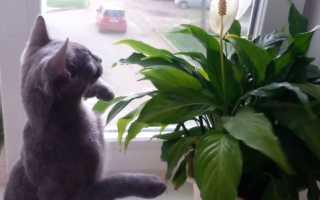 Как отучить кошку рыть землю и гадить в цветочных горшках