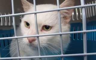 Как пристроить кота в приют навсегда или отдать на передержку на время