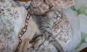 Как отучить кота спать на кровати с хозяином