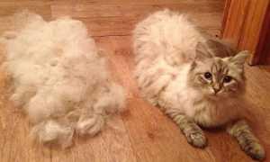 Почему у кота сильно лезет шерсть и что делать