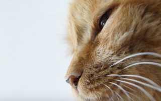 Каким должен быть нос у здорового кота
