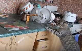 Как отучить кота лазить на стол и подоконник