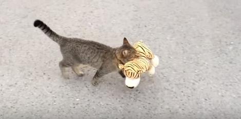 Каким командам можно научить кошку и как
