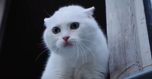 Как позвать кошку к себе